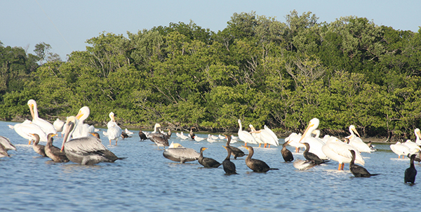 Everglades National Park, view from a kayak