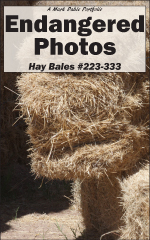 Cover of Endangered Photos: Hay Bales #223-333