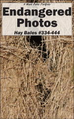 Cover of Endangered Photos: Hay Bales #334-444